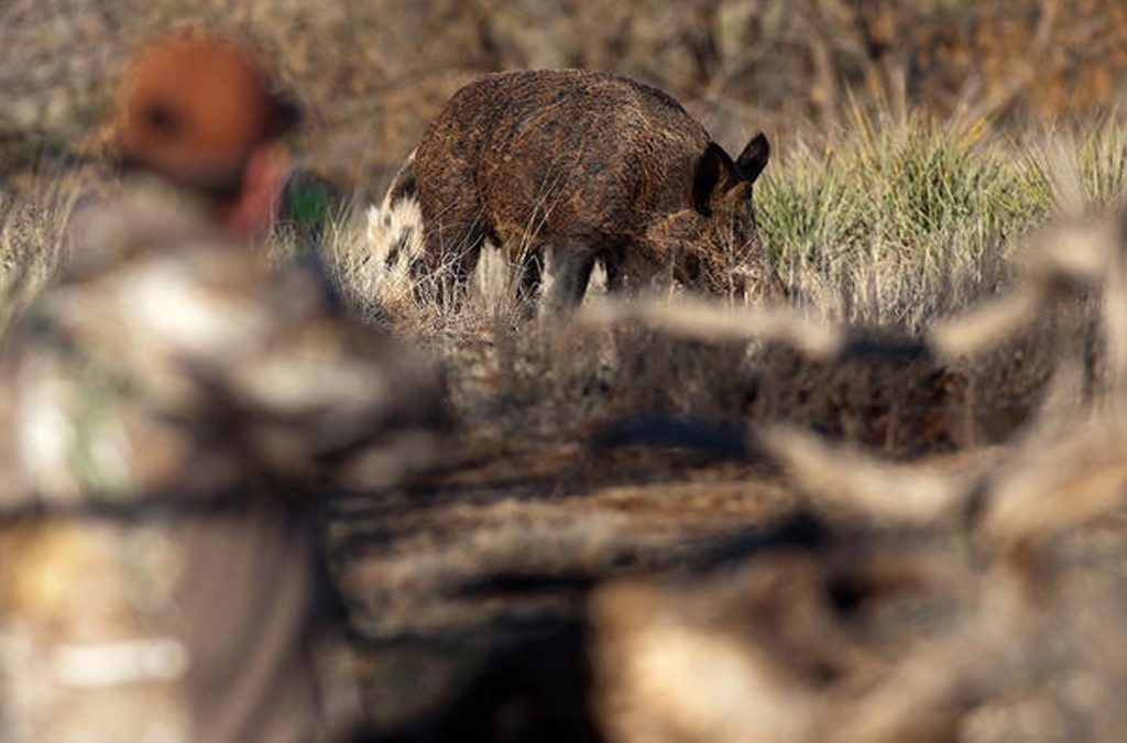 5 Best States for Pig Hunting